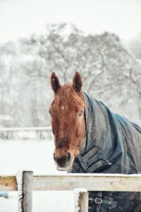 Using blankets on a horse in winter