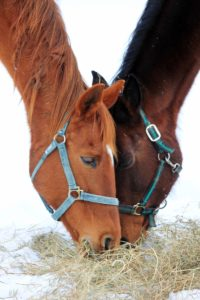Increase forage rations in winter