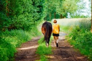 Things to do with your horse when you can't ride