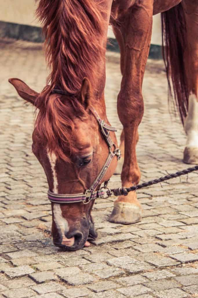 Why your horse is licking and eating dirt
