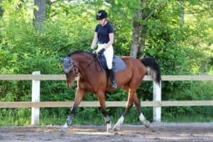 What muscles does horse riding work